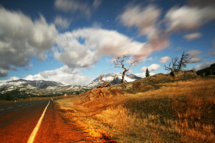 Crowsnest Pass, Alberta, Canada, Burmis Tree