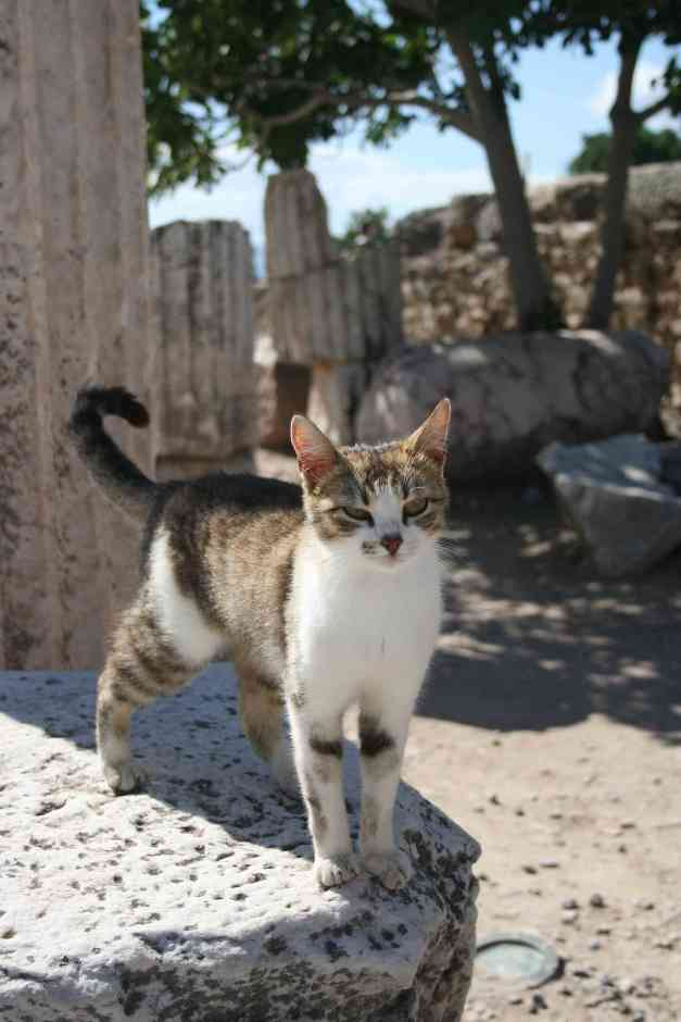 Ephesus, Turkey, photography, travel photography, Ephesus Ruins, cat