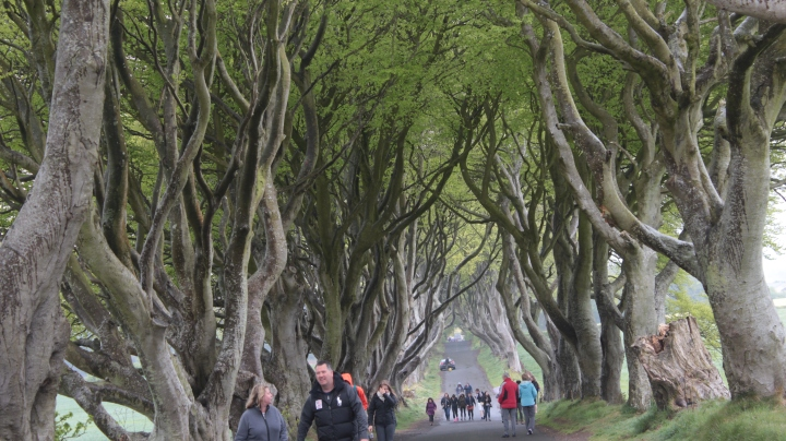 Dark Hedges, Northern Ireland, Ireland, Game of Thrones, Film Locations, Game of Thrones Filming Locations, photography, travel, travel photography, photos, images