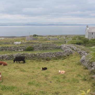 Irish Landscapes, Aran Islands, Inishmore, Aran Islands Inishmore