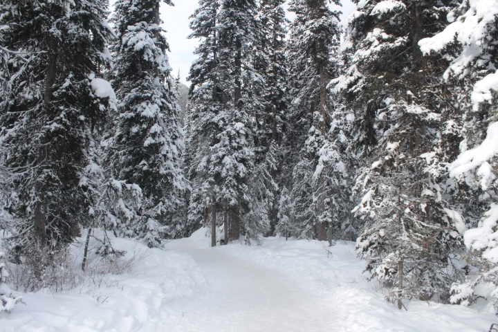 Lake Louise Winter, Banff Winter, Banff in Winter, Banff Canada Winter, Banff National Park winter, Lake Louise, Ice Magic Festival, Banff National Park