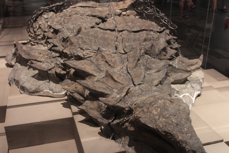 Dinosaur Mummy, Royal Tyrrell Museum, Nodosaur Fossil