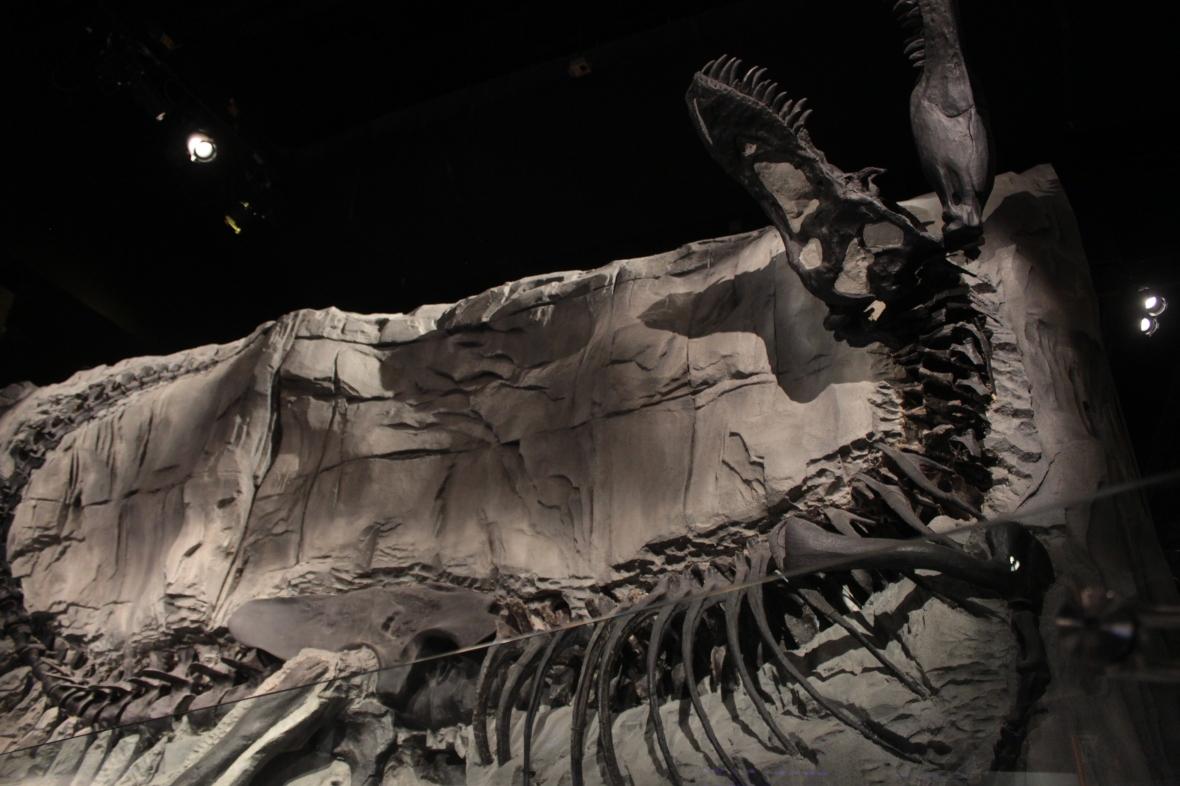 Black Beauty, Tyrannosaurus Rex, T-Rex, Royal Tyrrell Museum, fossil