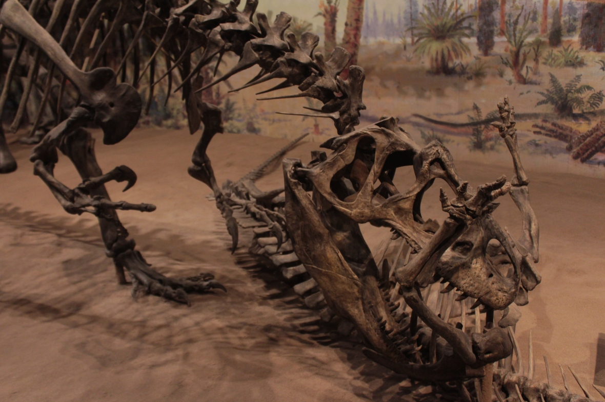 Dinosaur Hall, Royal Tyrrell Museum, Drumheller, Alberta