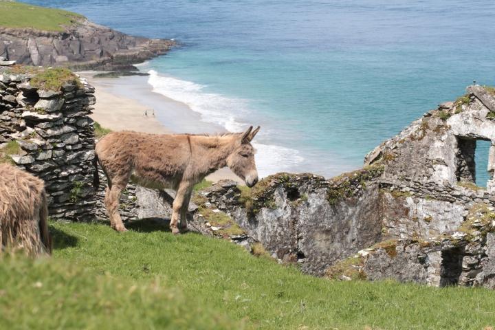 Dingle Peninsula, Dingle, Ireland, Dingle Ireland, Great Blasket Island, day trip